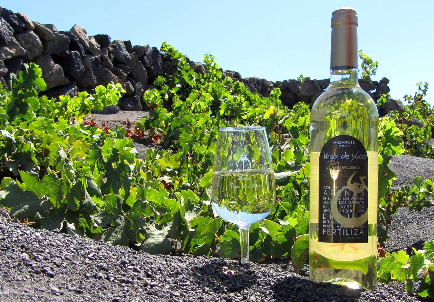 El primer vino 2017 de Canarias