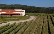 Aumentan las propiedades biosaludables del vino