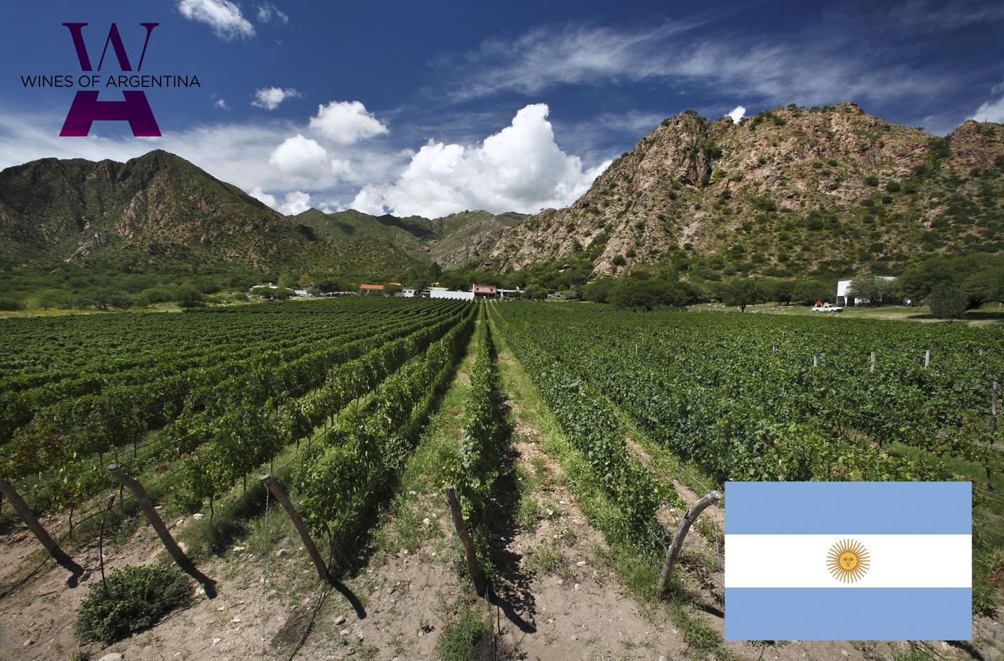 ¿Por qué en Argentina subió la producción de vino si en el mundo vive su peor caída en 50 años?