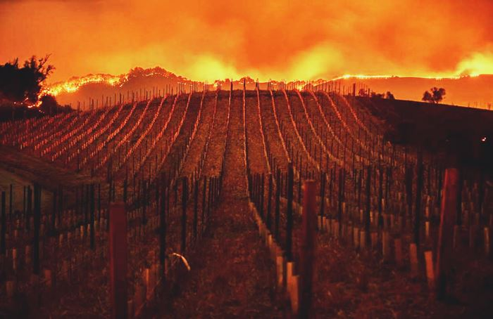 La industria del vino de California devastada