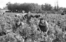 Las mujeres y la viña