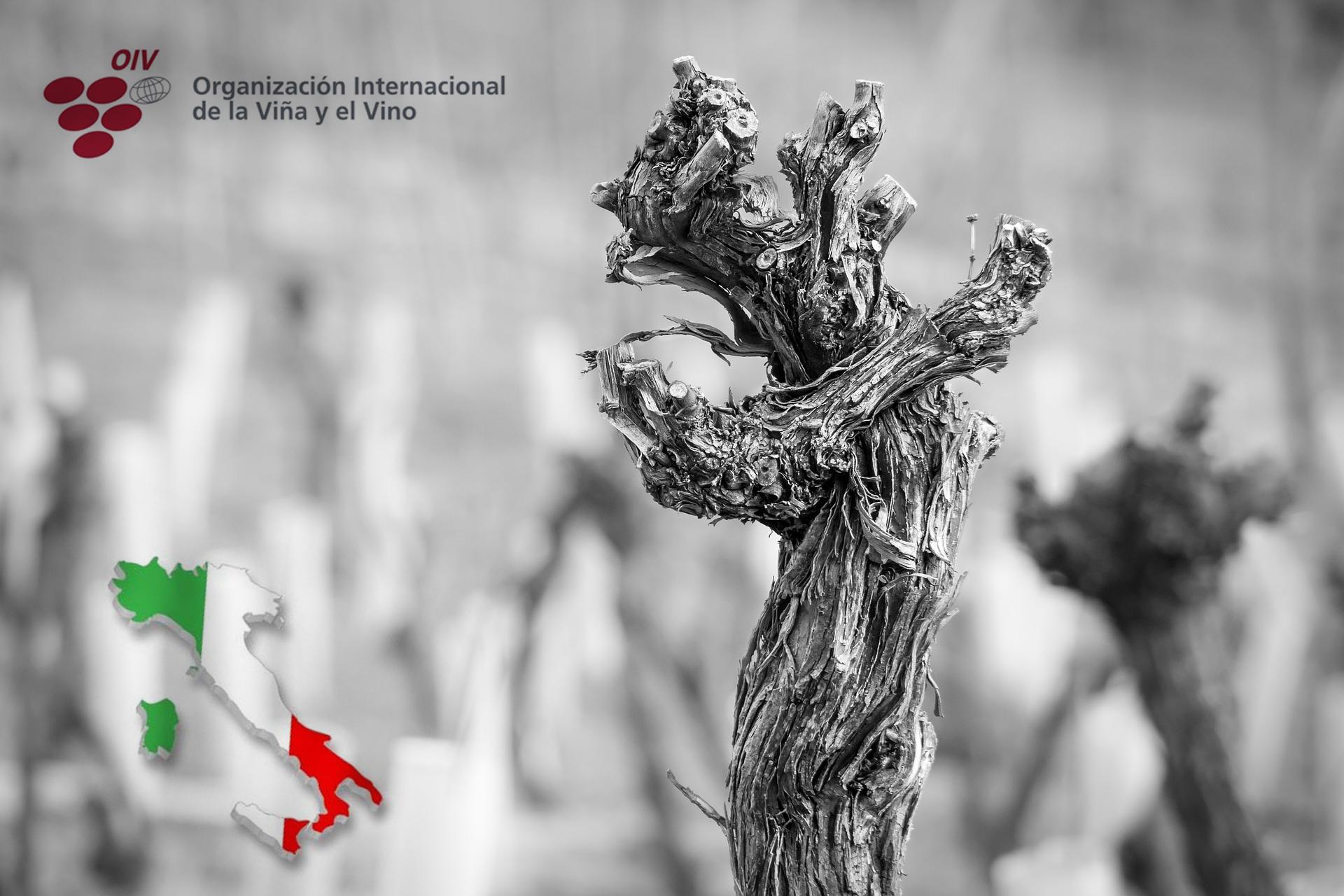 Panorama vitivinícola de Italia