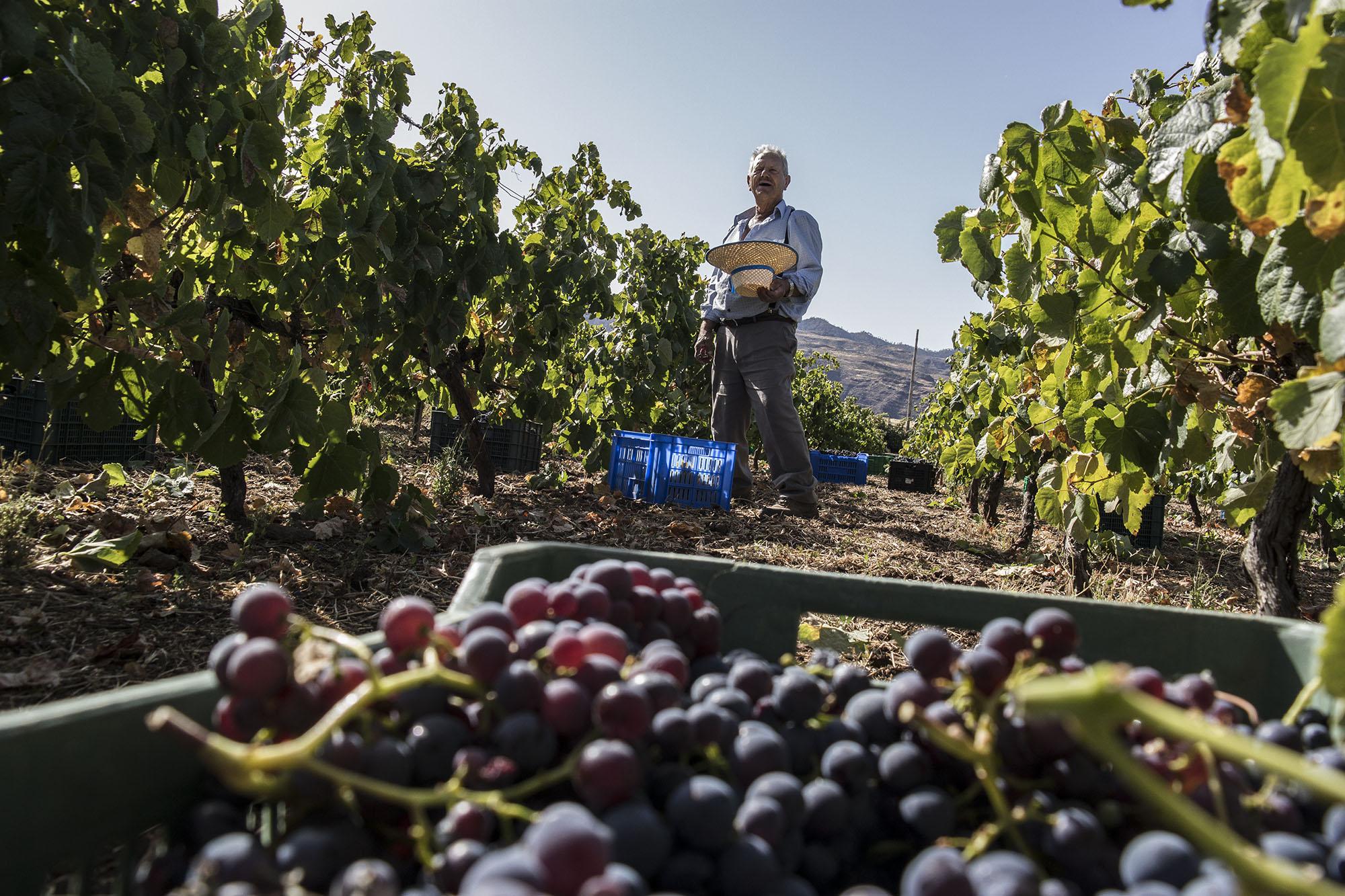 AVIBO por la unidad del sector vitivinícola