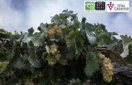Agricultura Ecológica aplicada al Viñedo y al Vino