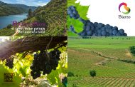 Grandes vinos de pequeñas producciones