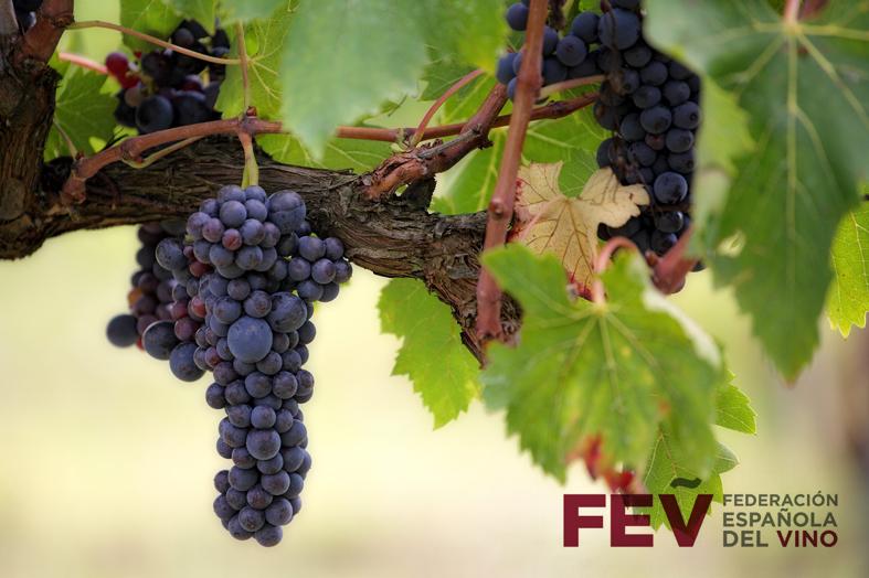 ¿Qué es la F.E.V.?
