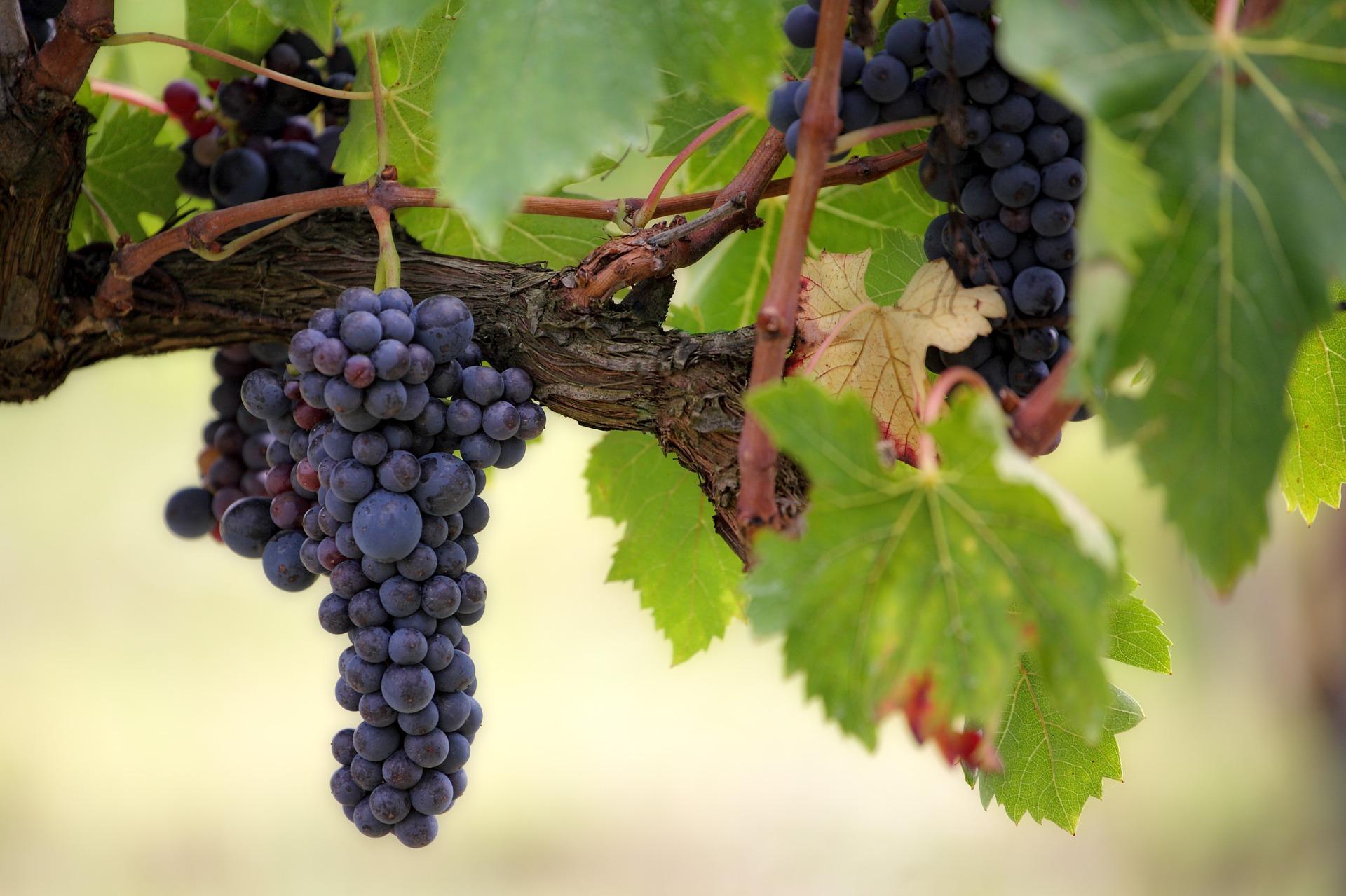 Datos de mercado de vinos de calidad diferenciada