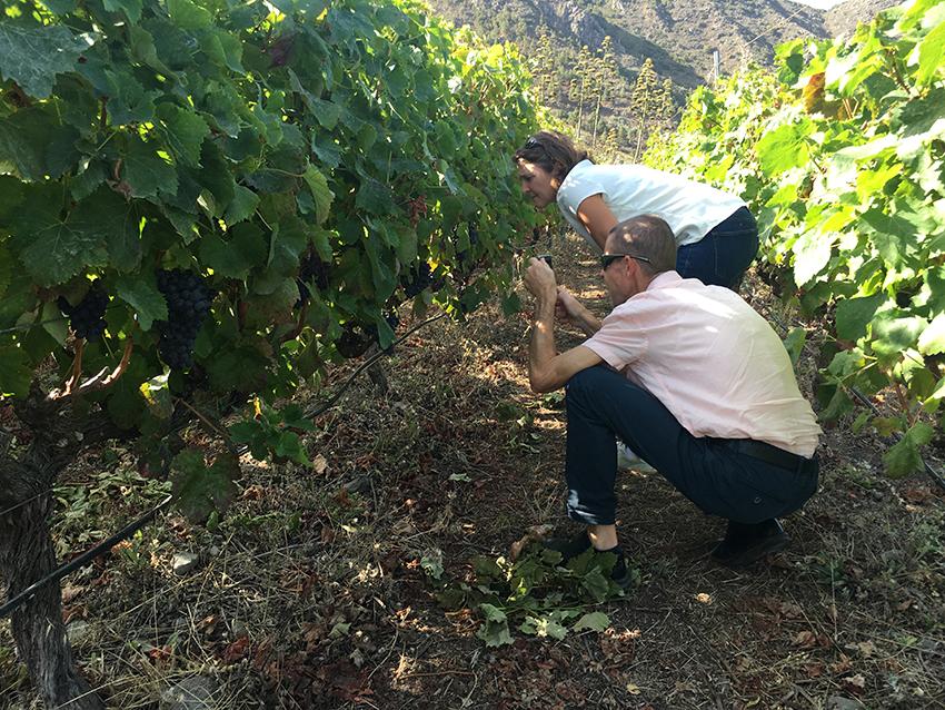Profesores del Liceo Vitícola más antiguo de Francia, visitan a viticultores y bodegas de Tenerife