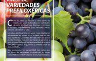 Taller de Cata de Vinos de variedades Prefiloxéricas de Tenerife