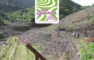 Presentación de la Cosecha 2018 del los Vinos de la DOP La Gomera