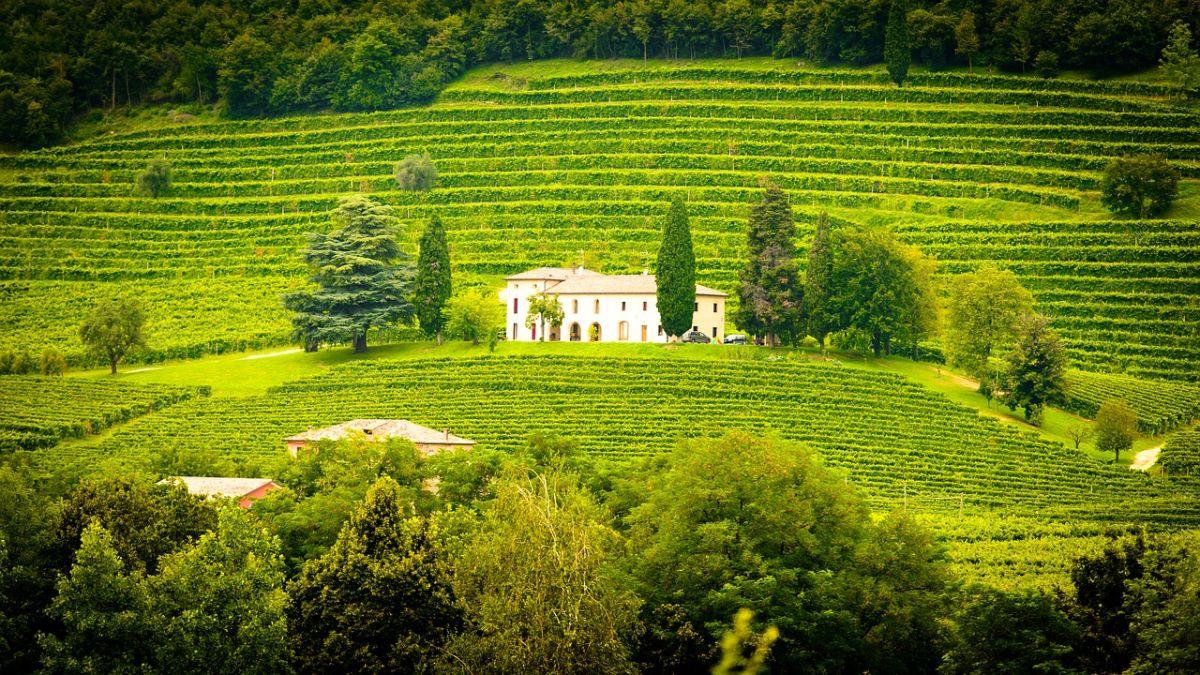 Experto en enoturismo será la profesión más demandada del sector vitivinícola