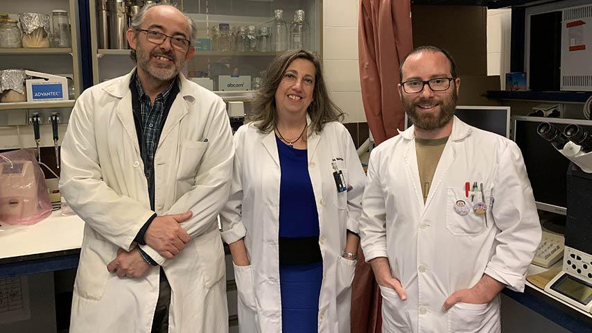 La Universidad de Castilla-La Mancha demuestra que el vino tinto tiene una molécula beneficiosa para prevenir el Alzhéimer
