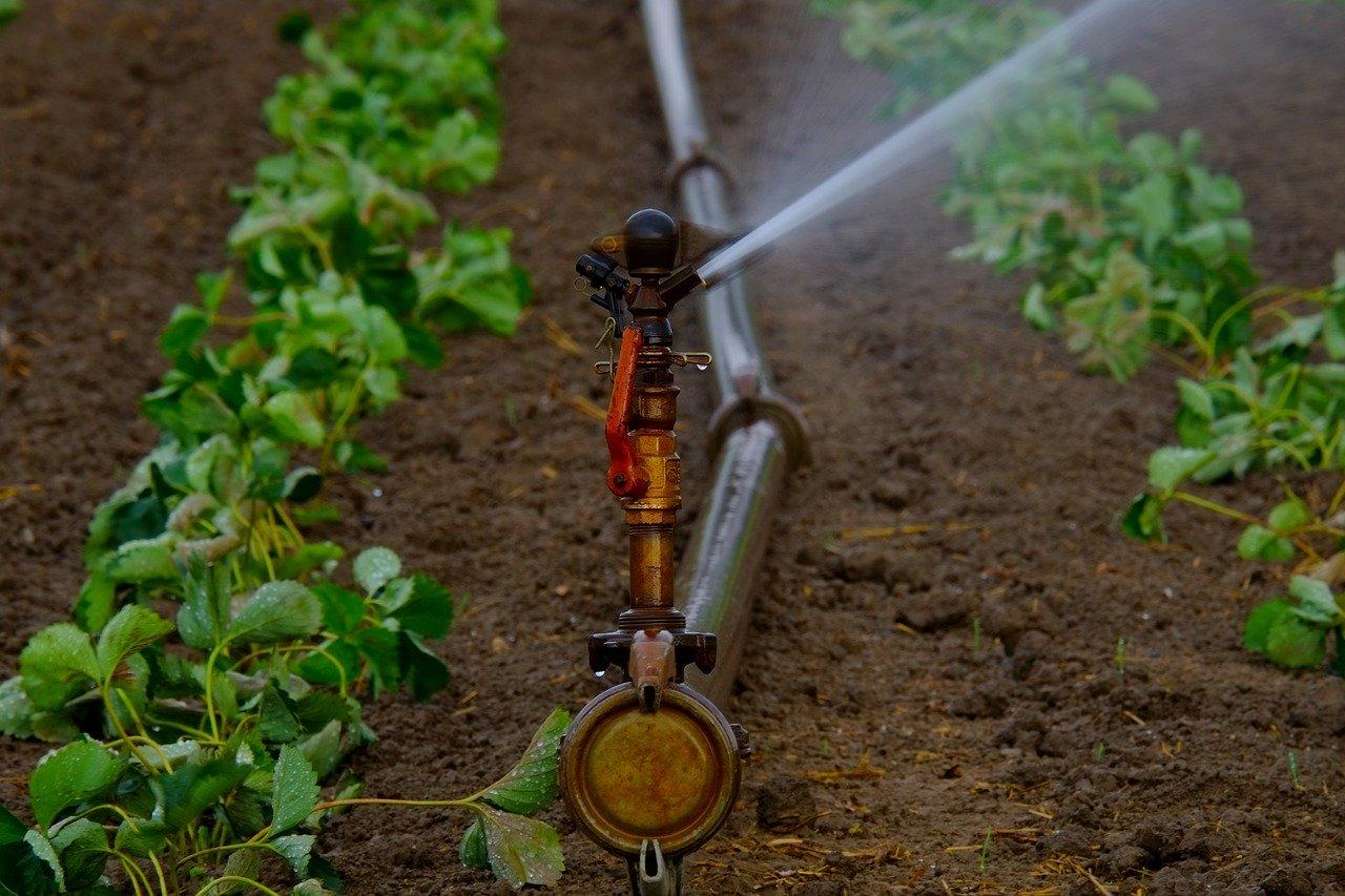 El Gobierno canario concede 8 millones en ayudas para abaratar el agua de uso agrícola