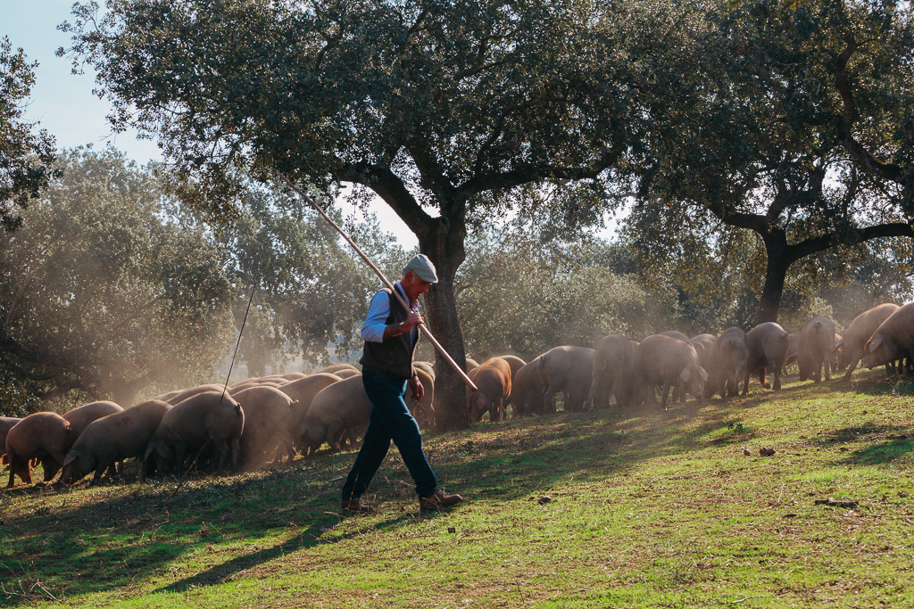 Montesano Extremadura presenta en San Sebastian Gastronomika '20 su jamón de bellota 100% ibérico, de la DO Dehesa de Extremadura, reciente ganador del Superior Taste Awards 2020 de Bruselas, en la categoría 'Producto Excepcional'
