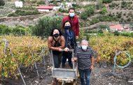 El Comité de Cata de la DOP Gran Canaria visita la imponente finca de Señorío de Cabrera