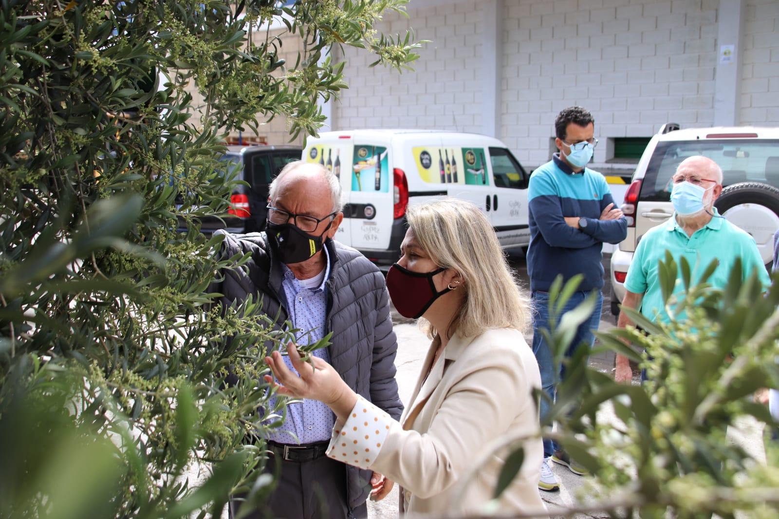 Vanoostende destaca en la Cooperativa Cumbres de Abona el impulso del aceite de oliva como producto de alto valor en Canarias